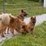 Briska, Isy vom Jagdschloß mit Sohn Ari vom Bärenschlössle