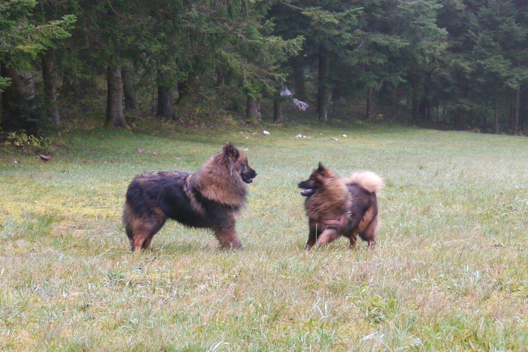 Shana & Teddy