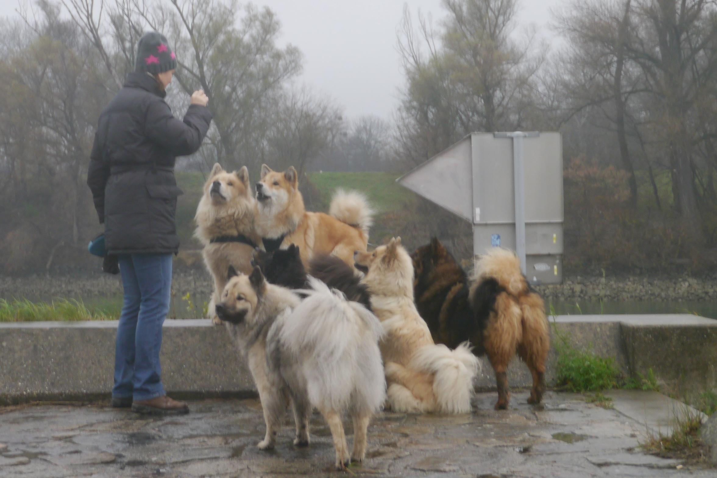 Karin mit vielen Eurasiern